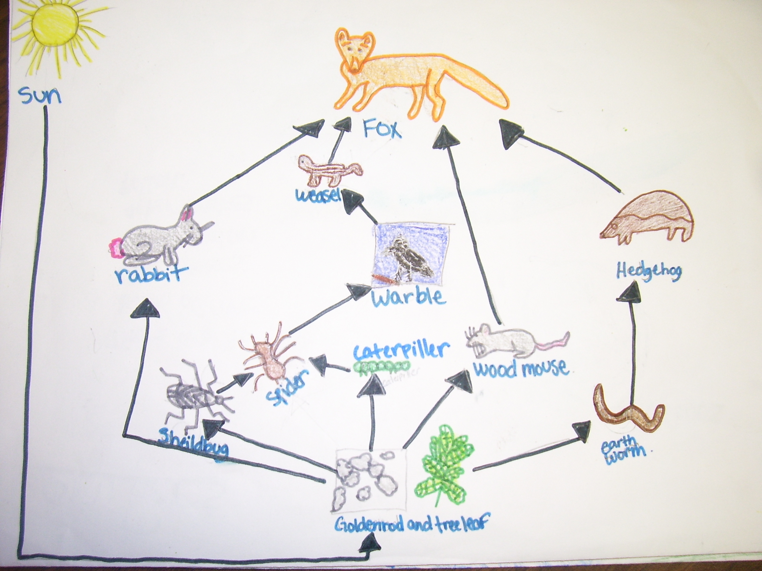 Similiar Temperate Deciduous Forest Food Web With Hedgehog