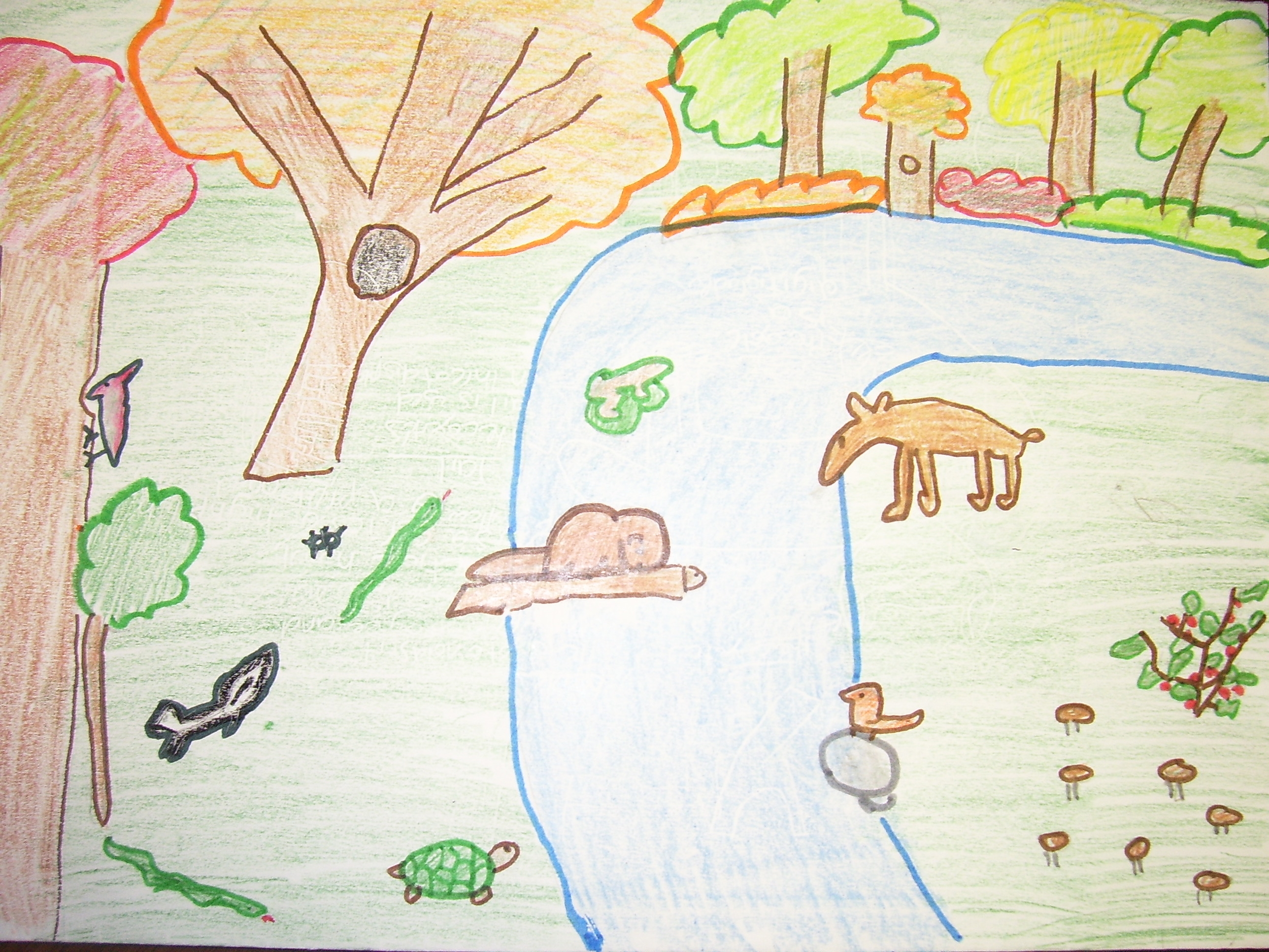 how to draw to draw the rainfoest biome